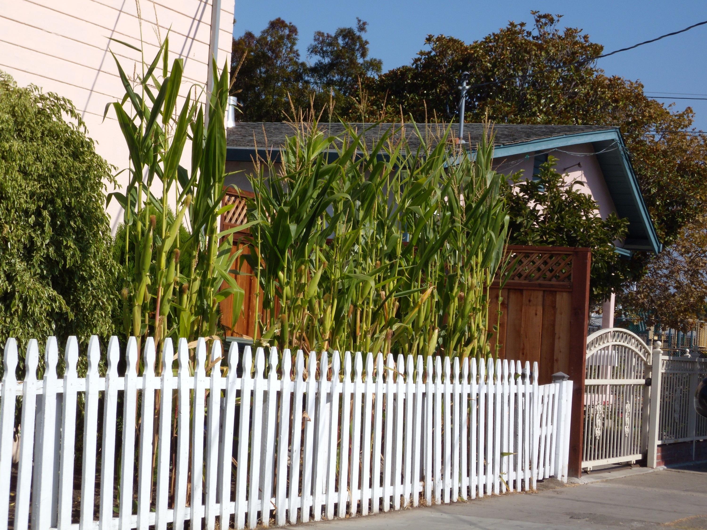 front yard food overall gardener