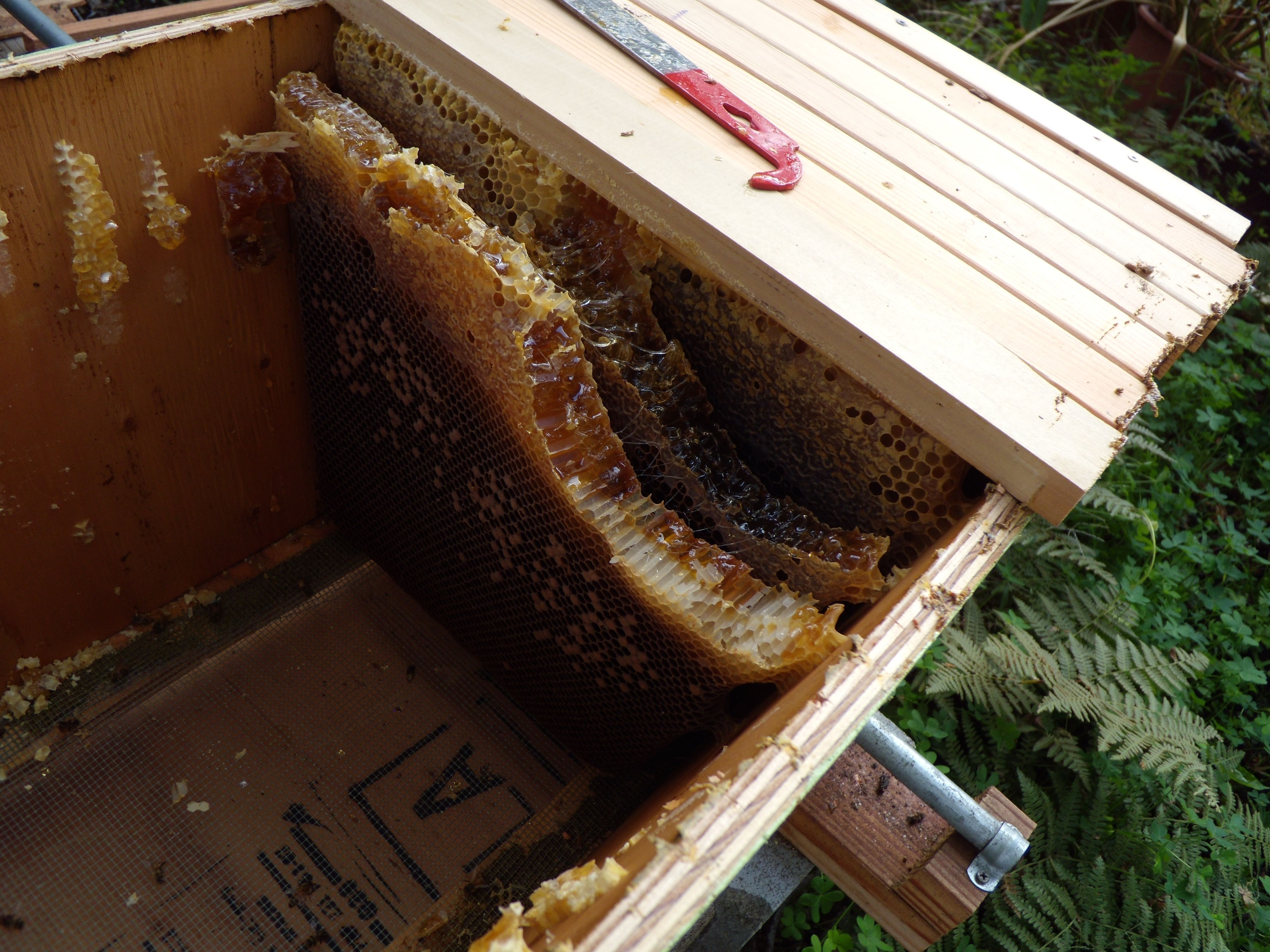 How To Avoid Cross-Comb In Top-Bars And Langstroth Hives