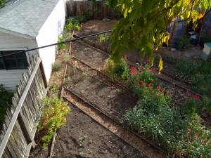 The garden's edge, where with any luck the grapes, artichokes, and lavender will take off this year.