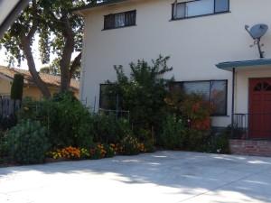 Front yard apartment edible garden.