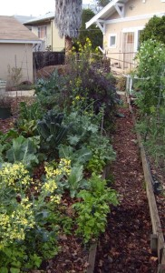 We've begun letting some of the brassicas go to flower, and the bees are loving it.
