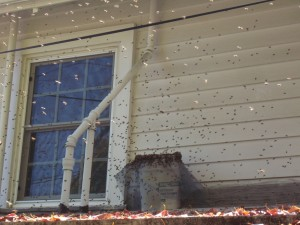 Swarm catching on a roof!