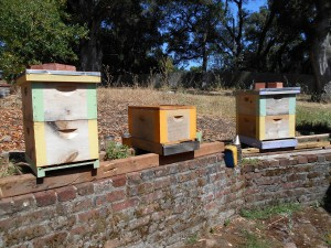 We'll move the two hives on the left to this new property. The larger one might be having some queen troubles, though their population looks great. If needed, we can combine the two later. The queen in the smaller hive has a fantastic brood pattern.